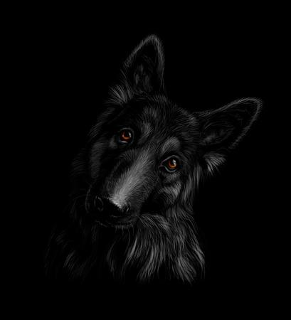 Portrait of a German shepherd dog on a black background