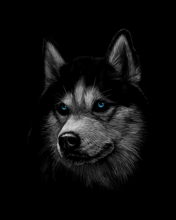 Portrait of the head of the Siberian Husky with blue eyes Ilustracja