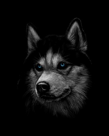Retrato de la cabeza del Husky siberiano con ojos azules Ilustración de vector