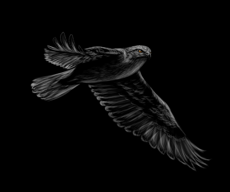 Portrait of a flying falcon on a black background.