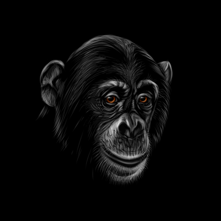 Portrait of a chimpanzee head on a black background. Vector illustration Banco de Imagens - 124117440