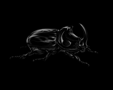 Portrait of a rhinoceros beetle on a black background