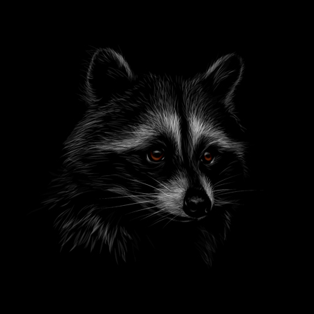 Portrait of a cute raccoon on a black background. Vector illustration Banco de Imagens - 124117441