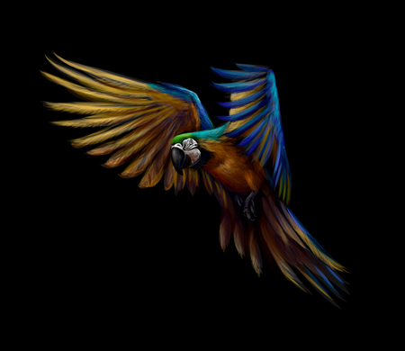 Portrait blue-and-yellow macaw in flight on a black background. Ara parrot, Tropical parrot. Vector illustration Illusztráció