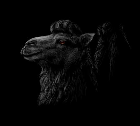 Portrait of a camel head on a black background. Vector illustration