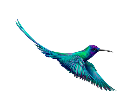 Hummingbird from a splash of watercolor, hand drawn sketch. Vector illustration of paints