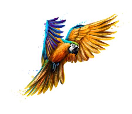 Portret niebiesko-żółty ara w locie z odrobiną akwareli. Papuga Ara, papuga tropikalna. Ilustracja wektorowa farb