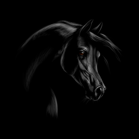 Portrait of an Arabian horse head on a black background. Vector illustration