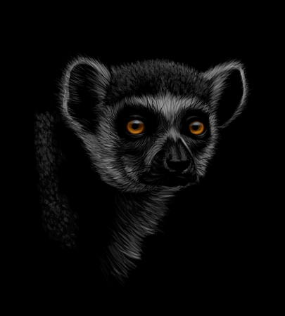 Portrait of a head of a ring-tailed lemur on a black background. Vector illustration