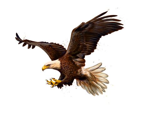 Retrato de un águila calva de un toque de acuarela, boceto dibujado a mano