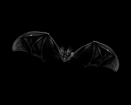 Portrait of a bat in flight on a black background. Halloween. Vector illustration Banco de Imagens - 124117451