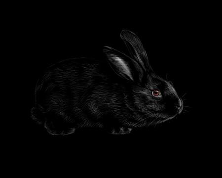 Portrait of a rabbit on a black background. Vector illustration Illustration