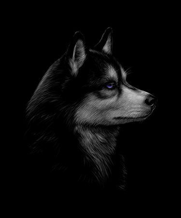 Portrait of the head of the Siberian Husky with blue eyes Ilustração