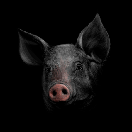 Portrait of a pig head on a black background. Chinese Zodiac Sign Year of Pig Vector Illustration