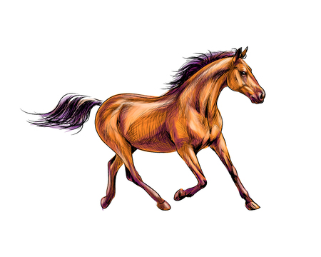Horse run gallop from splash of watercolors. Hand drawn sketch Ilustração