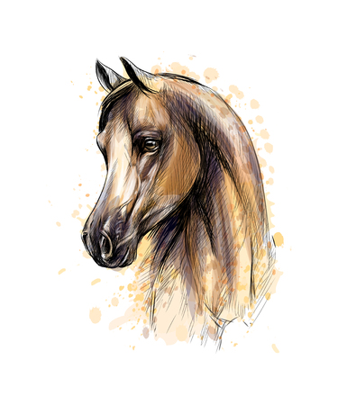 Horse head portrait from splash of watercolors. Hand drawn sketch. Vector illustration of paints 矢量图像