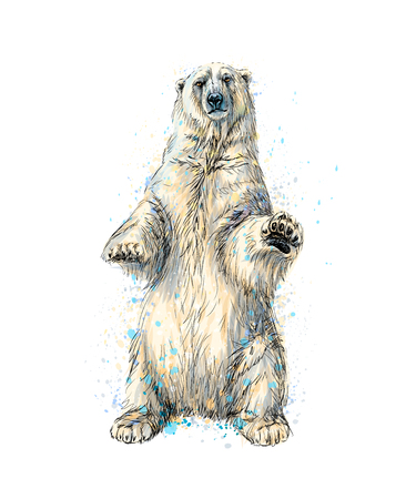 Abstract polar bear sitting from a splash of watercolor, hand drawn sketch Ilustração