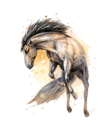 Horse run gallop from splash of watercolors. Hand drawn sketch. Vector illustration of paints