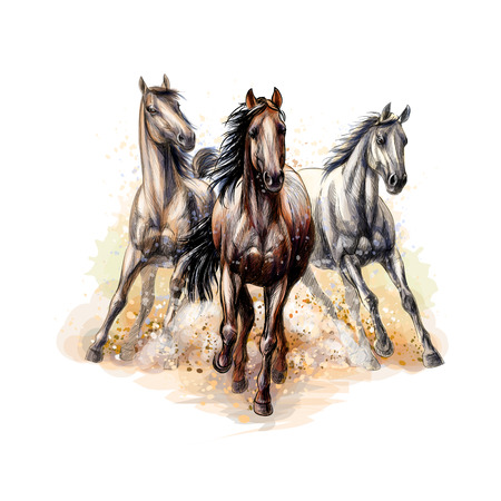Three horses run gallop from a splash of watercolor, hand drawn sketch. Vector illustration of paints Ilustração