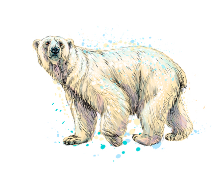 Abstract polar bear from a splash of watercolor, hand drawn sketch.