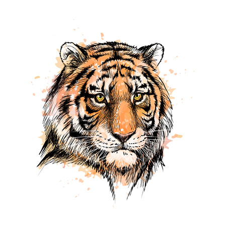 Portrait of a tiger head from a splash of watercolor