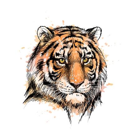 Portret głowy tygrysa z odrobiny akwareli