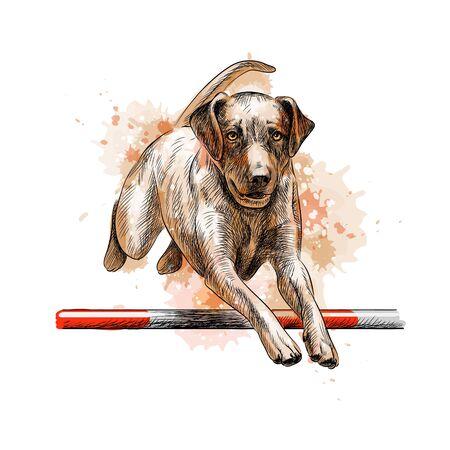 Labrador retriever sautant dans un entraînement d'agilité à partir d'une touche d'aquarelle, croquis dessiné à la main Vecteurs