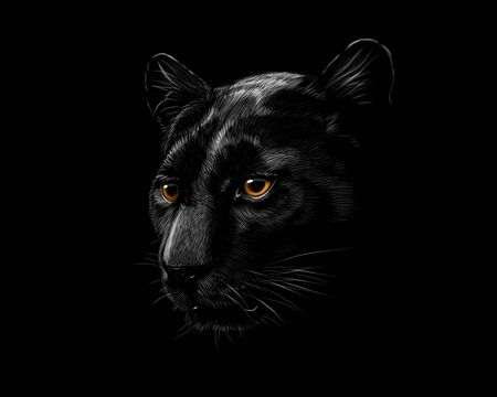 Head of a black panther isolated on a black background Ilustração