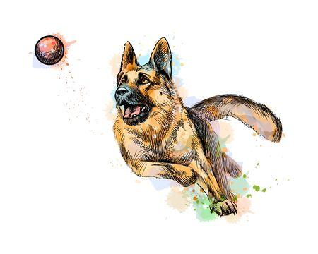 Perro pastor alemán jugando y atrapando una pelota de un toque de acuarela, boceto dibujado a mano