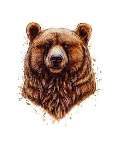Portrait of a brown bear head from a splash of watercolor