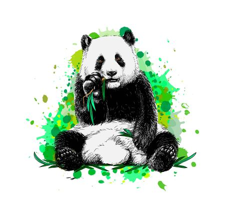 Panda sitting and eating bamboo from a splash of watercolor
