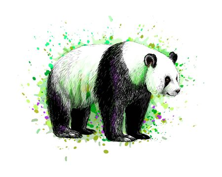 Portrait of a Panda bear from a splash of watercolor