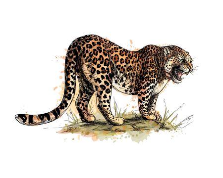 Porträt eines Leoparden aus einem Spritzer Aquarell