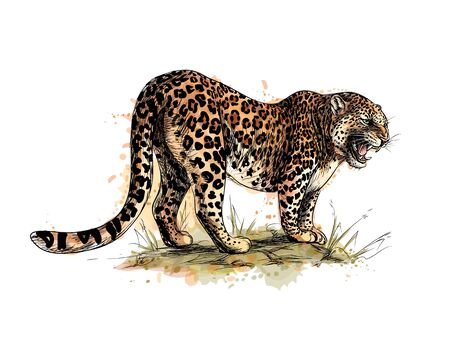 Portrait of a leopard from a splash of watercolor