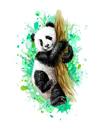 Panda baby cub sitting on a tree from a splash of watercolor Illustration