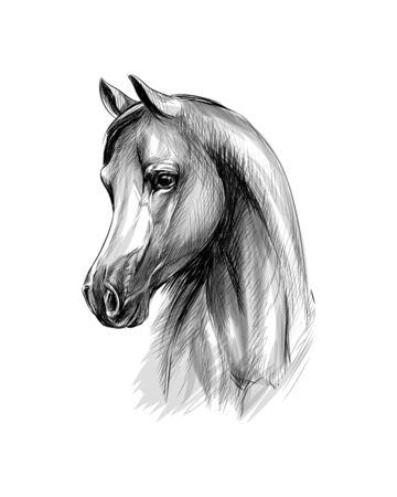 Pferdekopfporträt auf weißem Hintergrund. Handgezeichnete Skizze Vektorgrafik