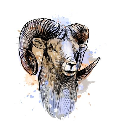 Bighorn Sheep, mountain sheep from a splash of watercolor, hand drawn sketch. Vector illustration of paints Ilustração