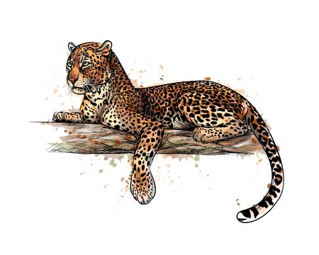 Leopard is lying on a tree from a splash of watercolor, hand drawn sketch. Vector illustration of paints