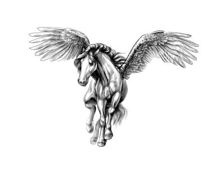 Pegasus mythical winged horse. Hand drawn sketch. Vector illustration of paints