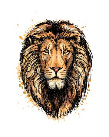Portrait of a lion head from a splash of watercolor, hand drawn sketch. Vector illustration of paints Ilustração