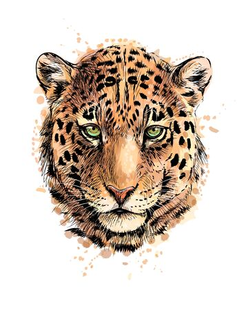 Portrait of a leopard head from a splash of watercolor, hand drawn sketch. Vector illustration of paints Illustration