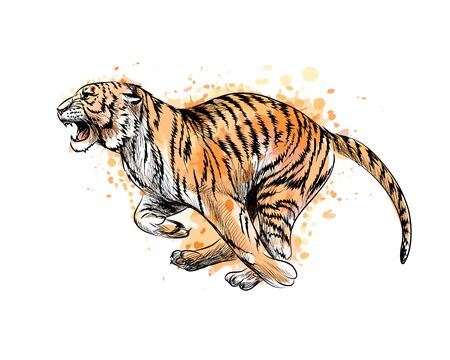 Tiger running from a splash of watercolor, hand drawn sketch. Vector illustration of paints