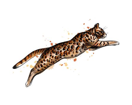 Bengal Cat Jumping from a splash of watercolor, hand drawn sketch. Vector illustration of paints