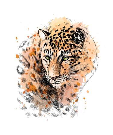 Portrait of a leopard from a splash of watercolor, hand drawn sketch. Vector illustration of paints Ilustração