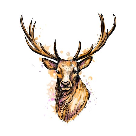 Portrait of a deer head from a splash of watercolor, hand drawn sketch. Vector illustration of paints Ilustração