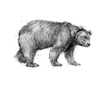 Portrait of a brown bear on white background, hand drawn sketch. Vector illustration of paints