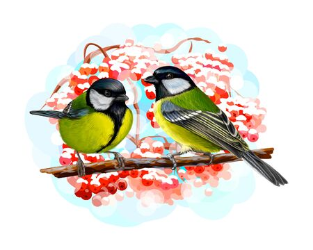 Tit birds sitting on a branch on white background, hand drawn sketch. Vector illustration of paints