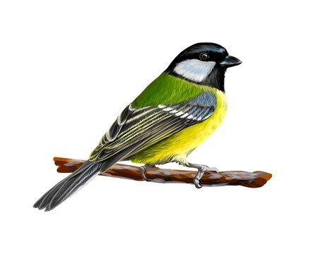Ritratto di un uccello tit seduto su un ramo su sfondo bianco, schizzo disegnato a mano. Illustrazione vettoriale di vernici Vettoriali