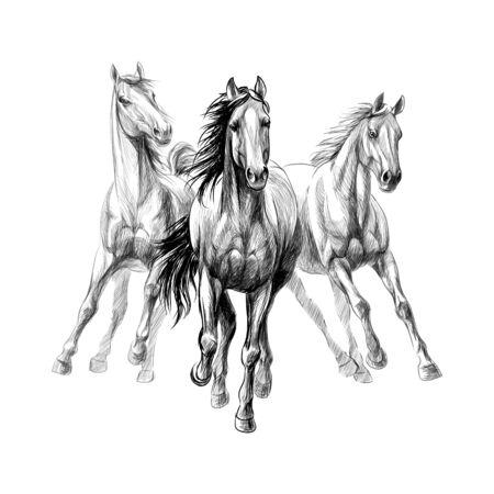 Tre cavalli corrono al galoppo su sfondo bianco, schizzo disegnato a mano