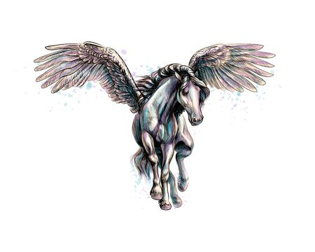 Pegasus mythical winged horse from splash of watercolors. Hand drawn sketch Illustration
